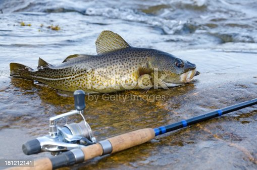 932662672 istock photo Cod coast fishing 181212141
