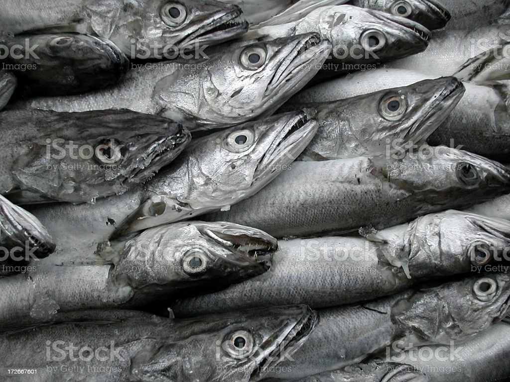 cod fishes royalty-free stock photo