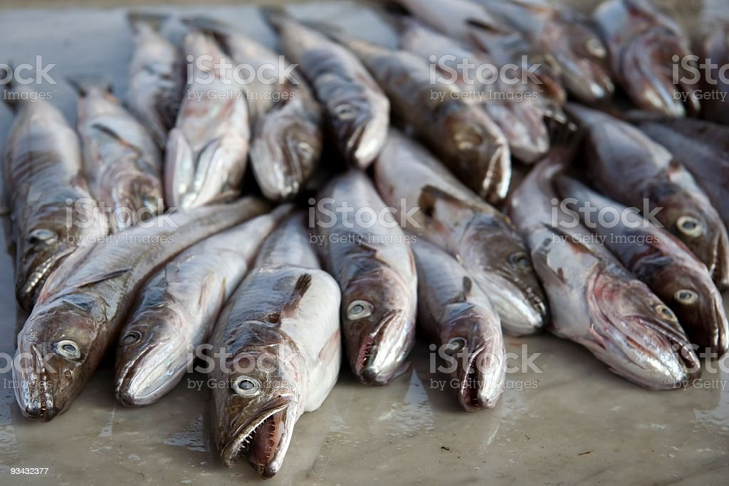 Bacalao fishes - foto de stock