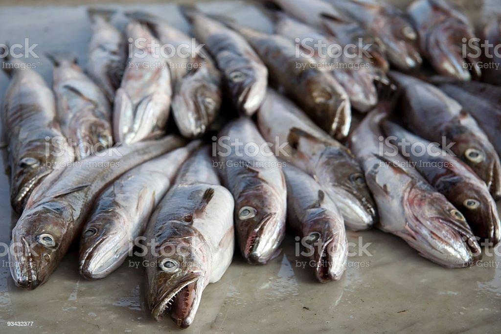 Bacalhau Peixes - fotografia de stock