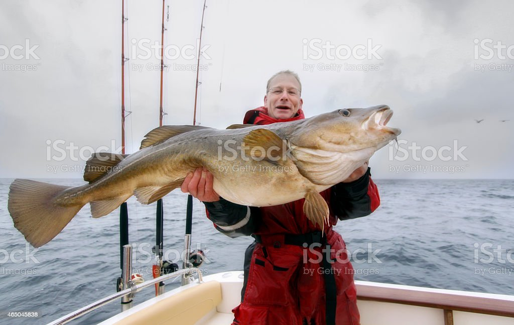 cod  fishing stock photo