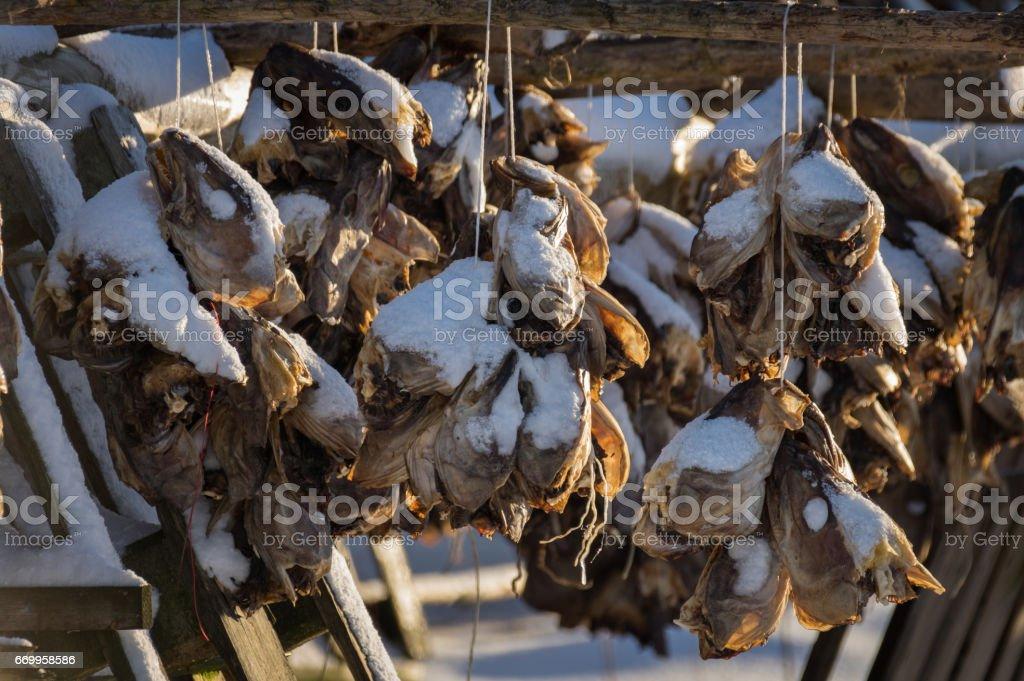 Cod Fishing royalty-free stock photo
