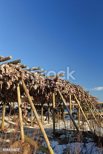 Fresh-non salted cod heads hanging from hjells-wooden scaffolding framed dryers in the cold winter air and sun from February to May to produce stockfish. Reine-Moskenes-Lofoten-Nordland fylke-Norway.
