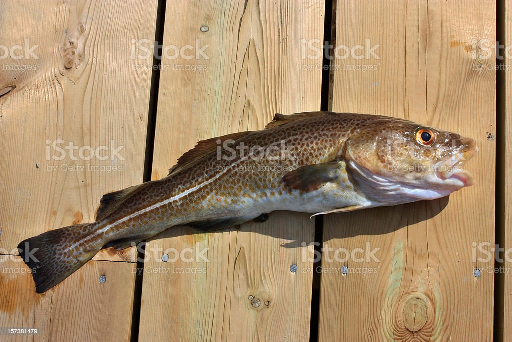 Cod on Wooden Dock royalty-free stock photo