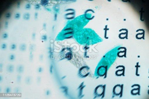 DNA code with euglena under microscopy