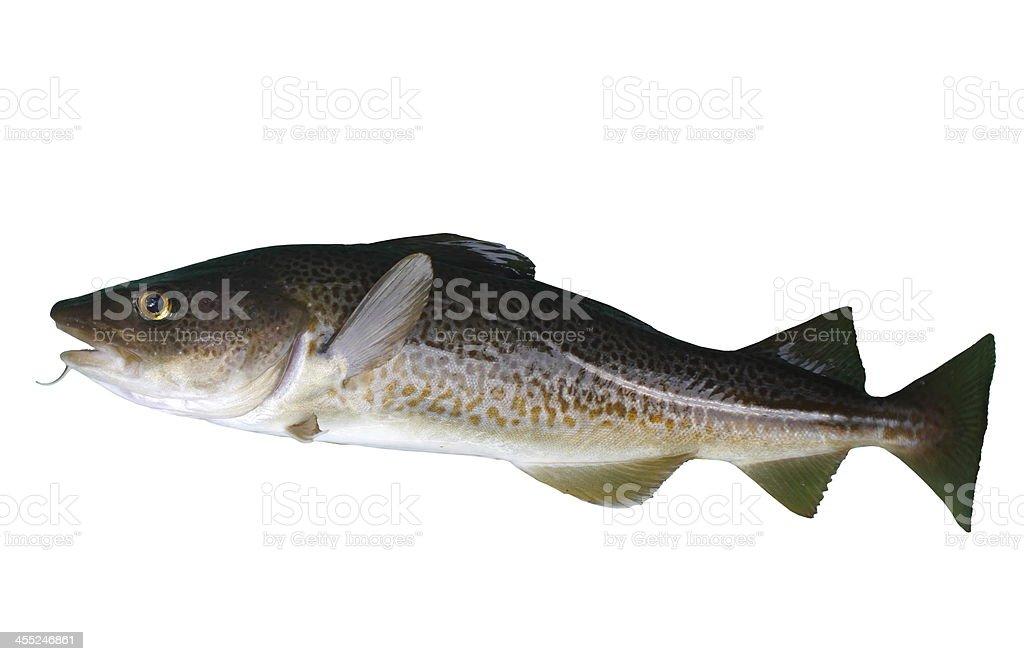 Bacalhau - fotografia de stock