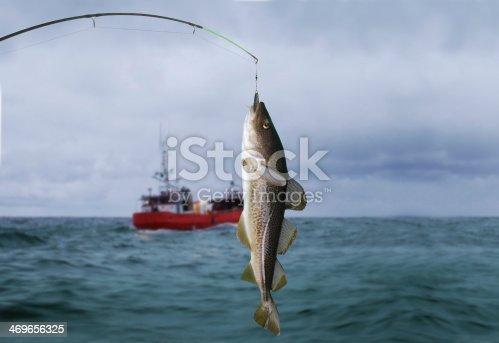 932662672istockphoto codfish 469656325