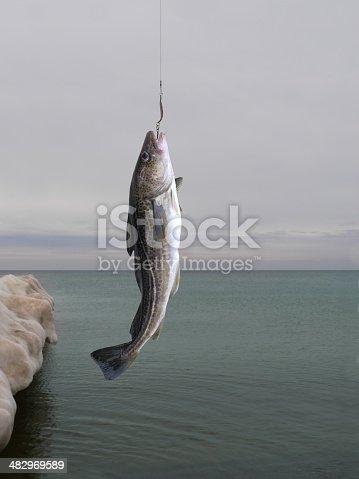 932662672istockphoto codfish 482969589
