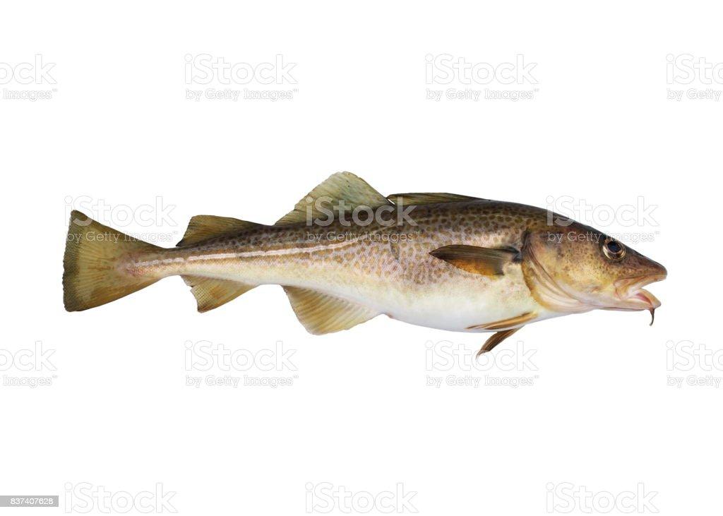 codfish - fotografia de stock