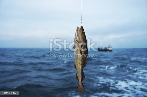 istock codfish 932662672