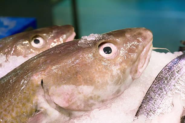 Cods on ice stock photo