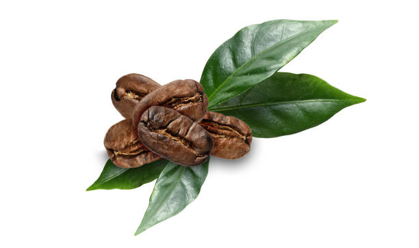 coffe beans with leaves on white coffe beans with leaves on white handful stock pictures, royalty-free photos & images