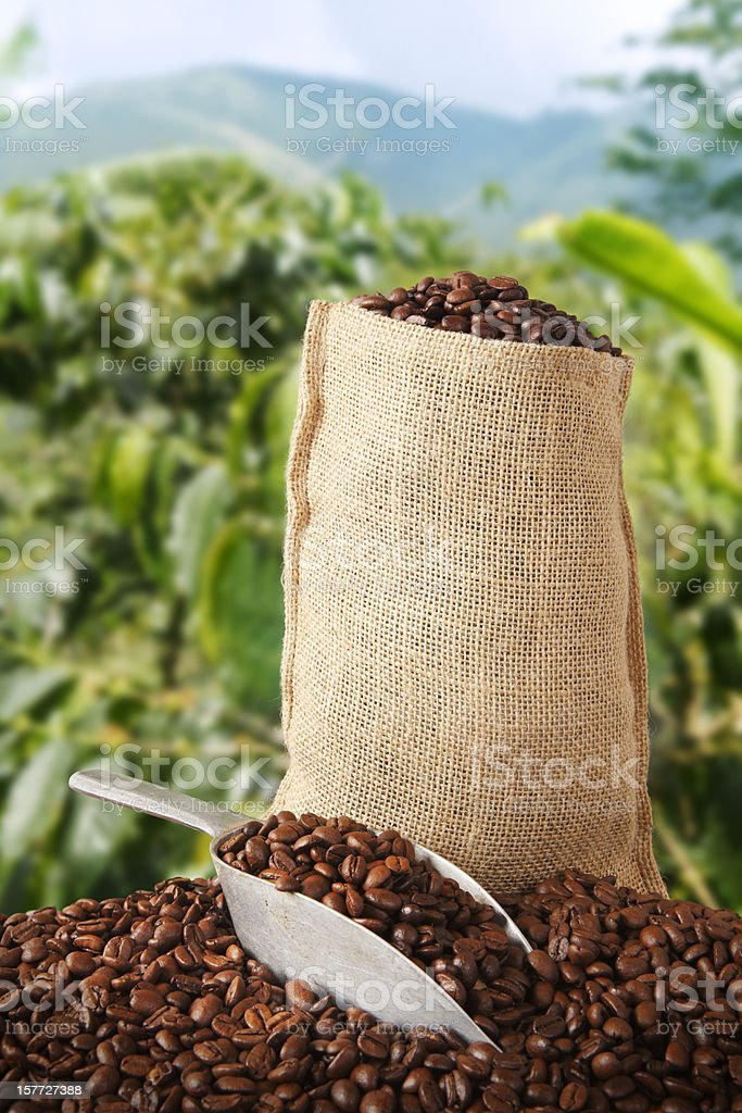 Coffee bag and plantation behind royalty-free stock photo