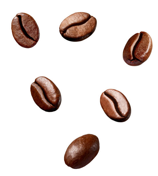 coffee bean brown roasted caffeine espresso seed collection of various coffee bean on white background roasted coffee bean stock pictures, royalty-free photos & images