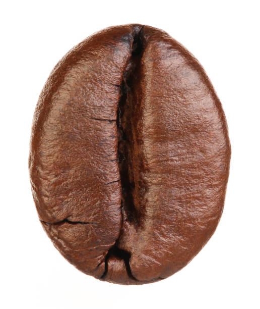 coffee bean isolated on white background - coffee beans stock photos and pictures
