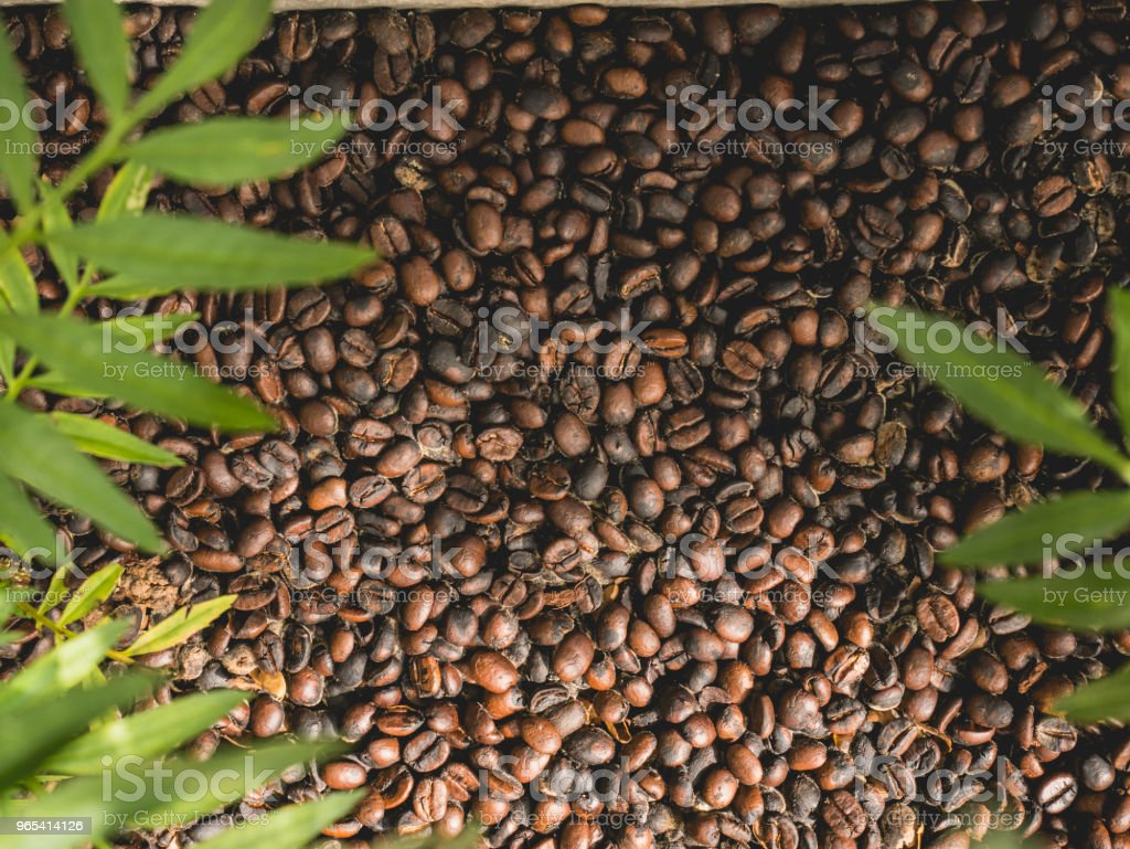 coffee beans background texture royalty-free stock photo