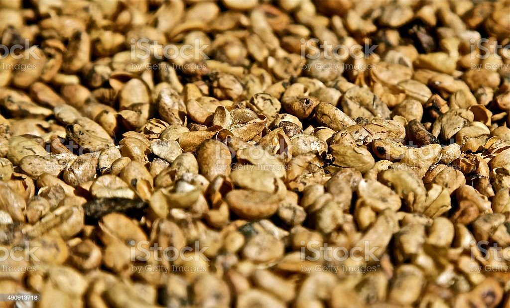 coffee beans fresh smell kopi luwak roasted grain coffee crop stock photo