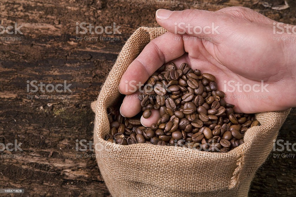 coffee beans in a jute bag with hand royalty-free stock photo