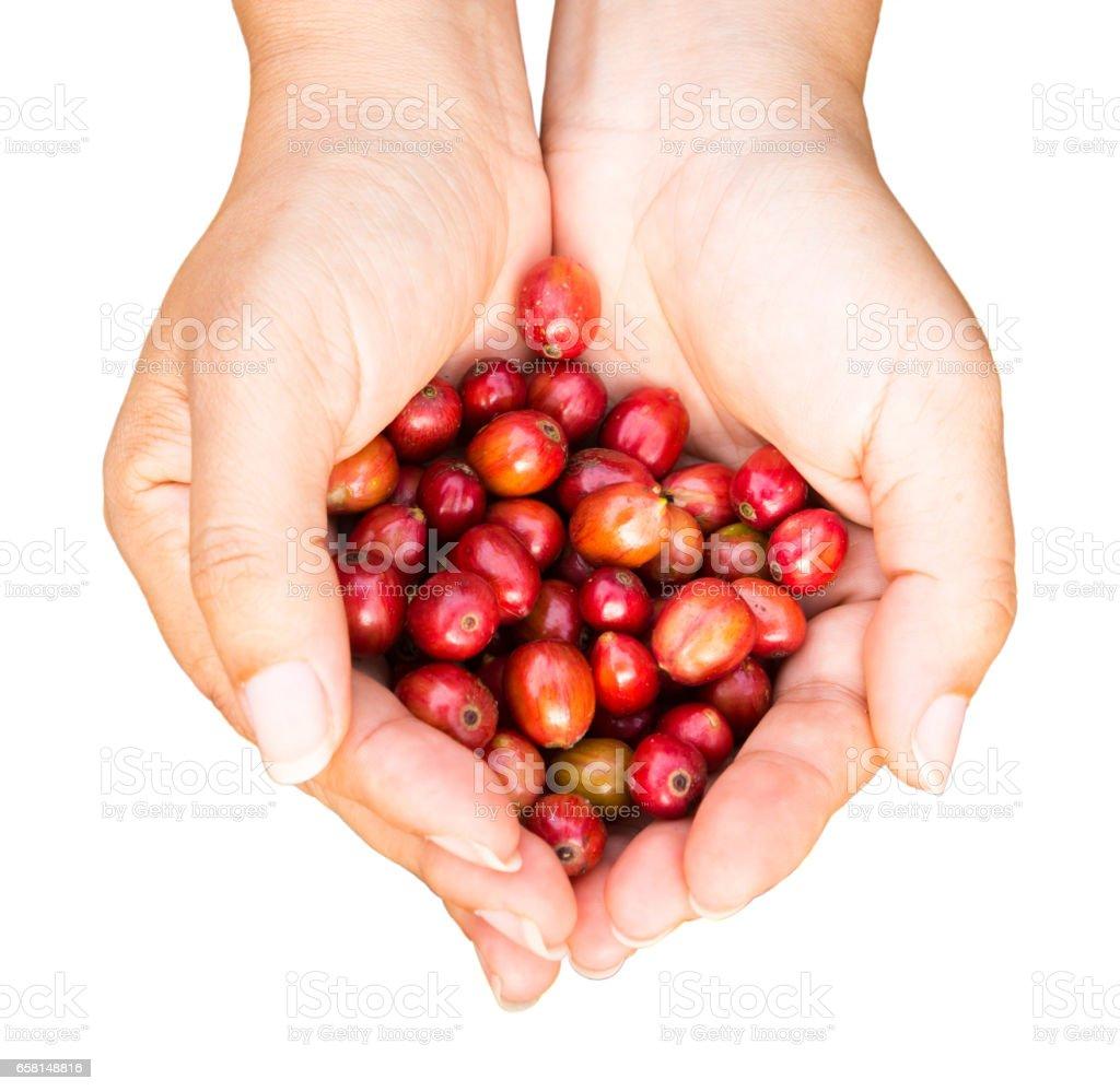 Kaffeebohnen in Händen auf weißem Hintergrund – Foto