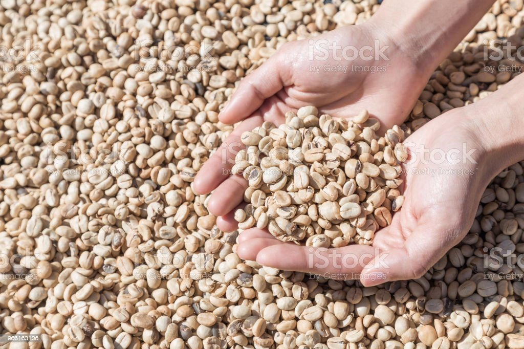 Coffee beans in woman hands. Coffee beans closeup background. green unroasted coffee beans. - Royalty-free Assado Foto de stock