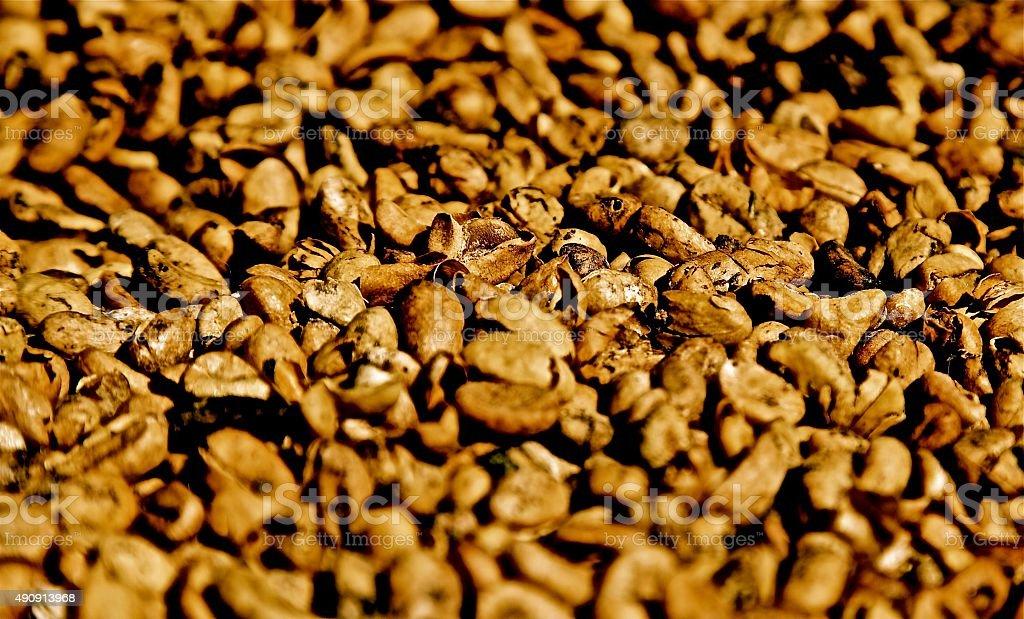 Coffee beans kopi luwak poop shit roasted grain coffee crop stock photo