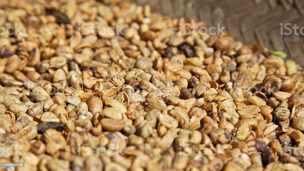 coffee beans kopi luwak sun dried roasted grain coffee crop stock photo