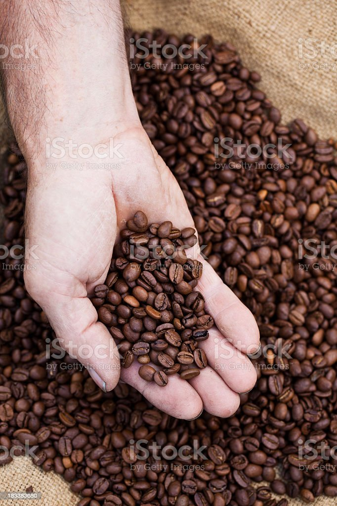 Coffee beans on palm royalty-free stock photo