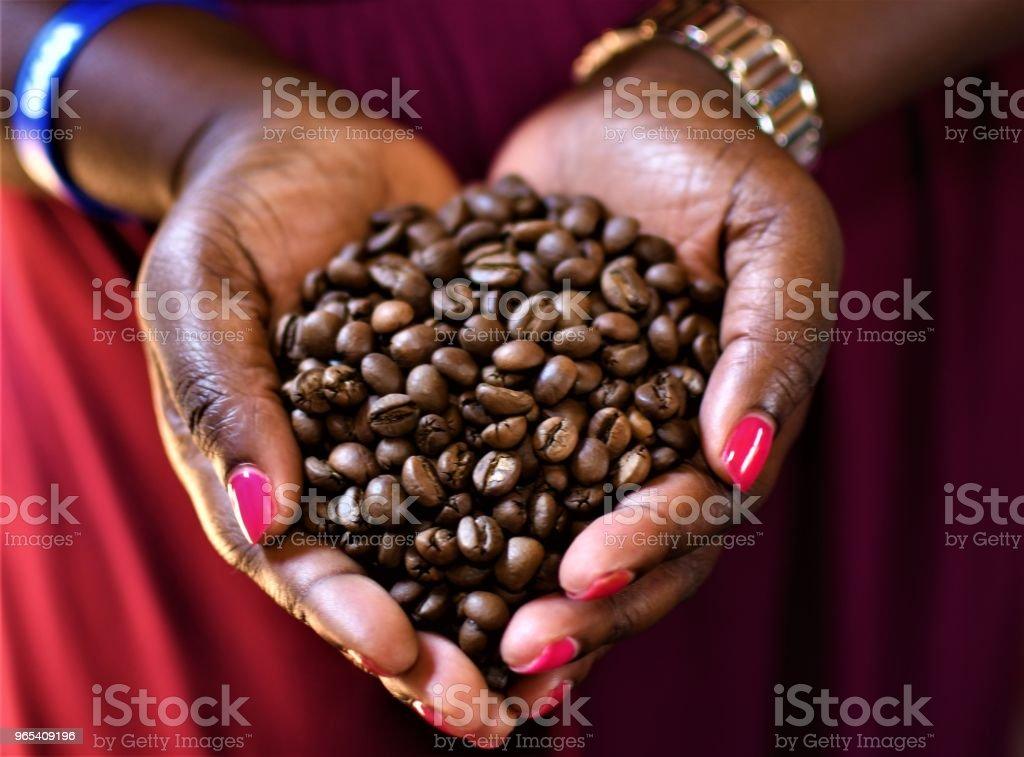 커피 원두 - 로열티 프리 0명 스톡 사진