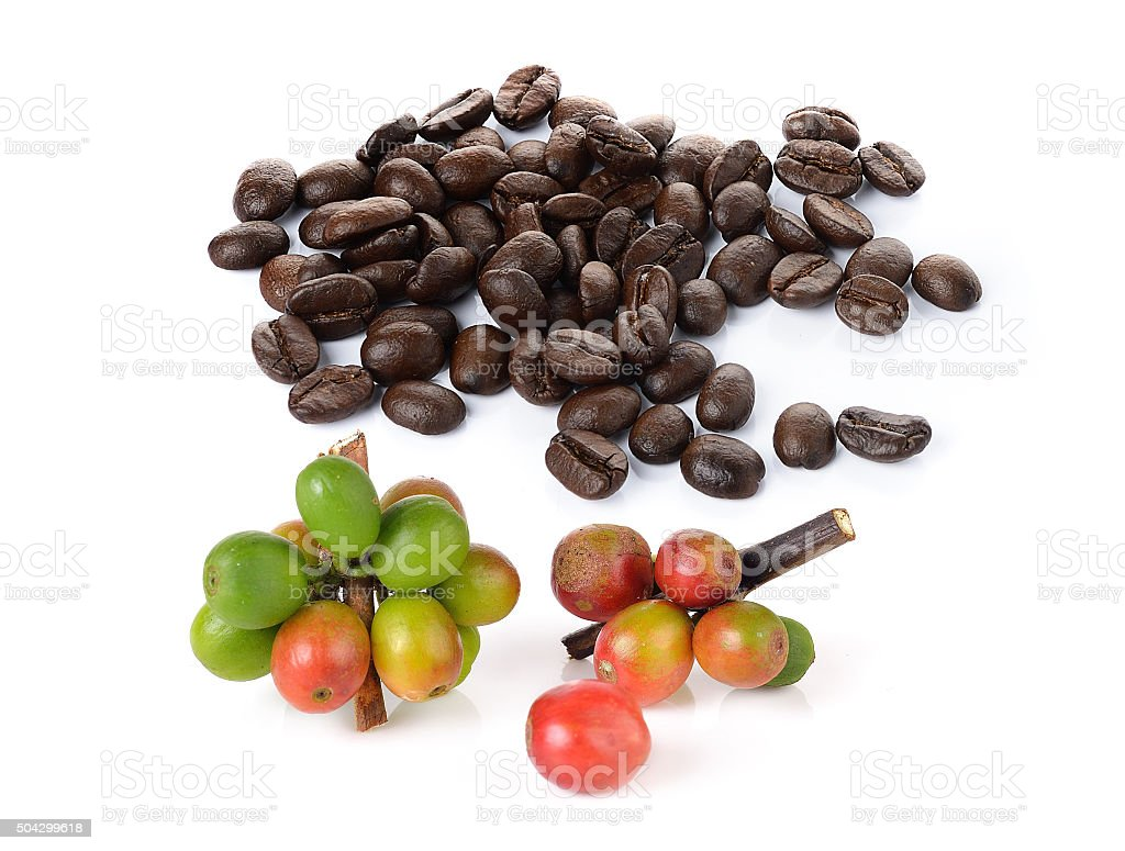 Coffee Berry And Coffee Beans Isolated On White Stock Photo Download Image Now Istock