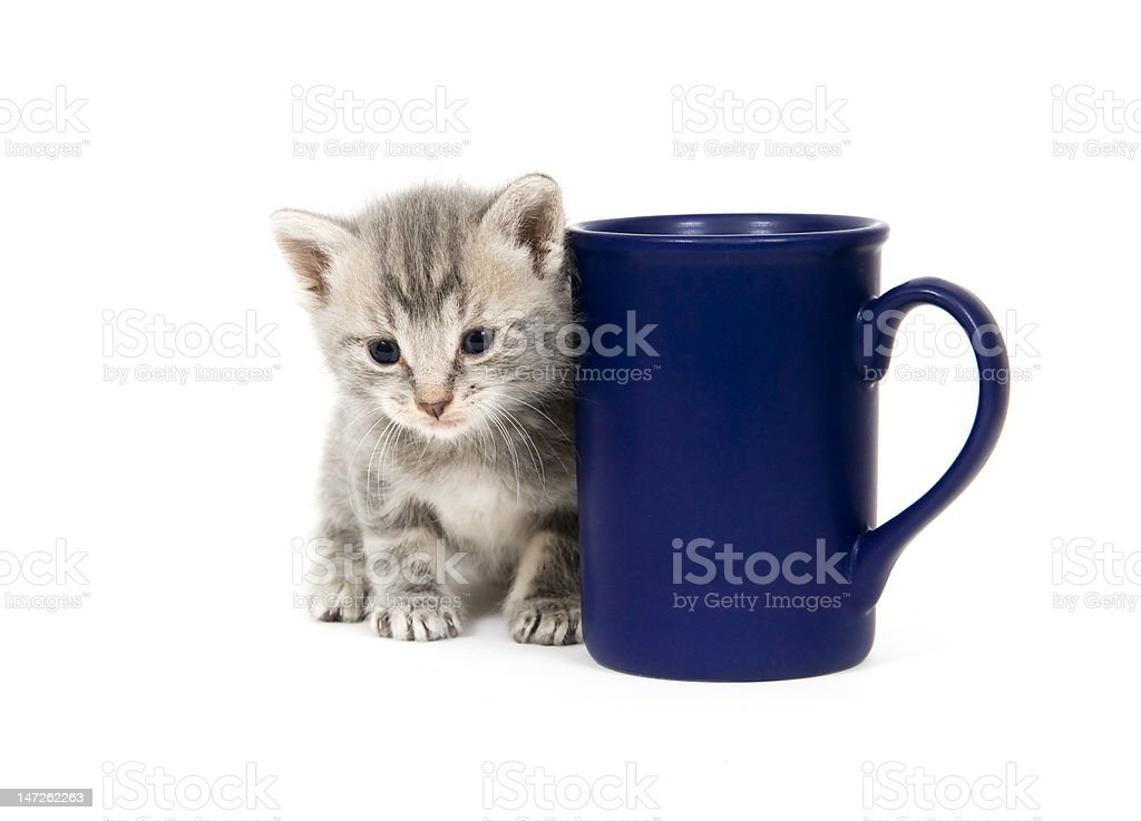 Coffee cup and kitten royalty-free stock photo