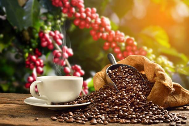 filiżanka kawy ziarna kawy - coffee zdjęcia i obrazy z banku zdjęć