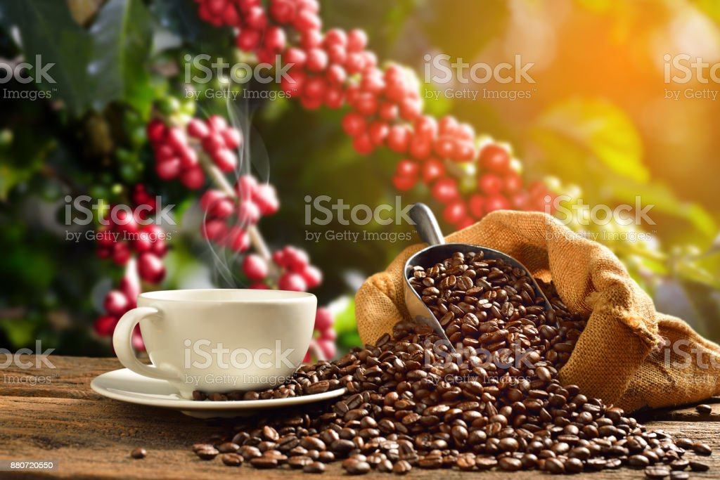 Coffee cup coffee beans stock photo