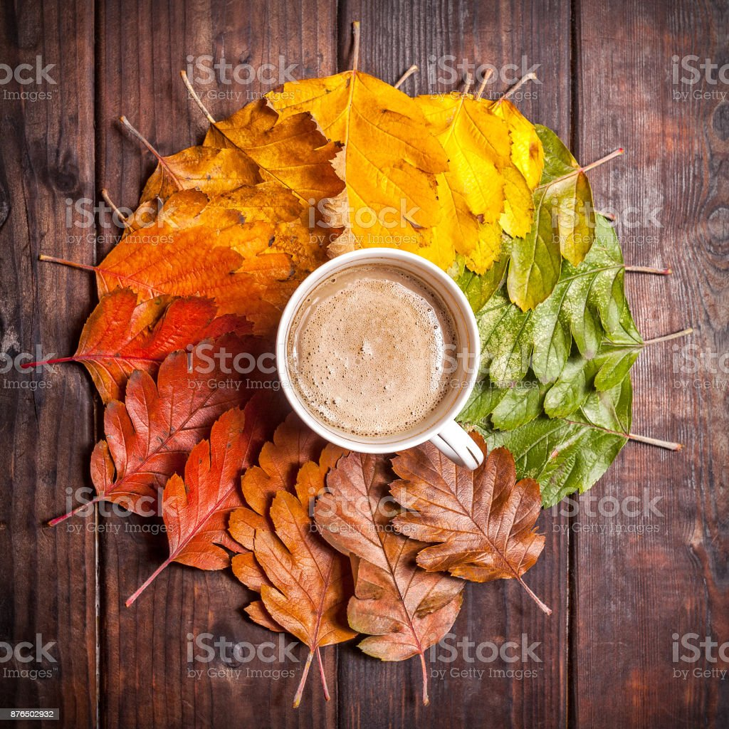 Coffee cup on the autumn leaves stock photo