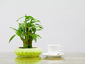coffee cup white and Bamboo tree in pot On the glass table wooden  a cement wall background. copy space