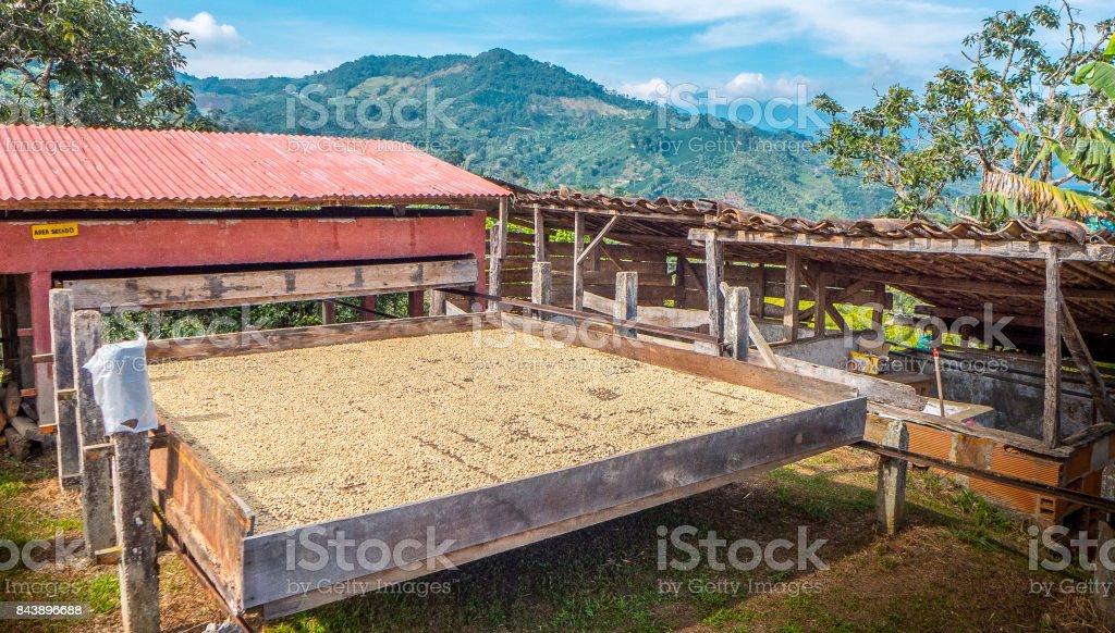 Cafe De Sechage En Jardin Colombie Photos Et Plus D Images De