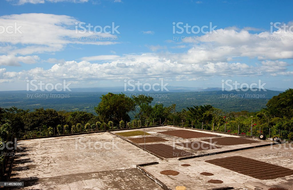 Coffee fermentation in Nicaragua stock photo