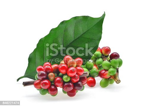 istock coffee grains and leaves isolated on white background 846221474