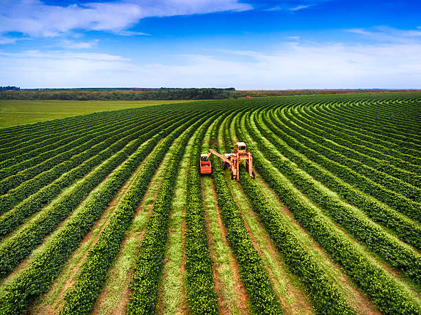 kaffee ernten - plantage stock-fotos und bilder