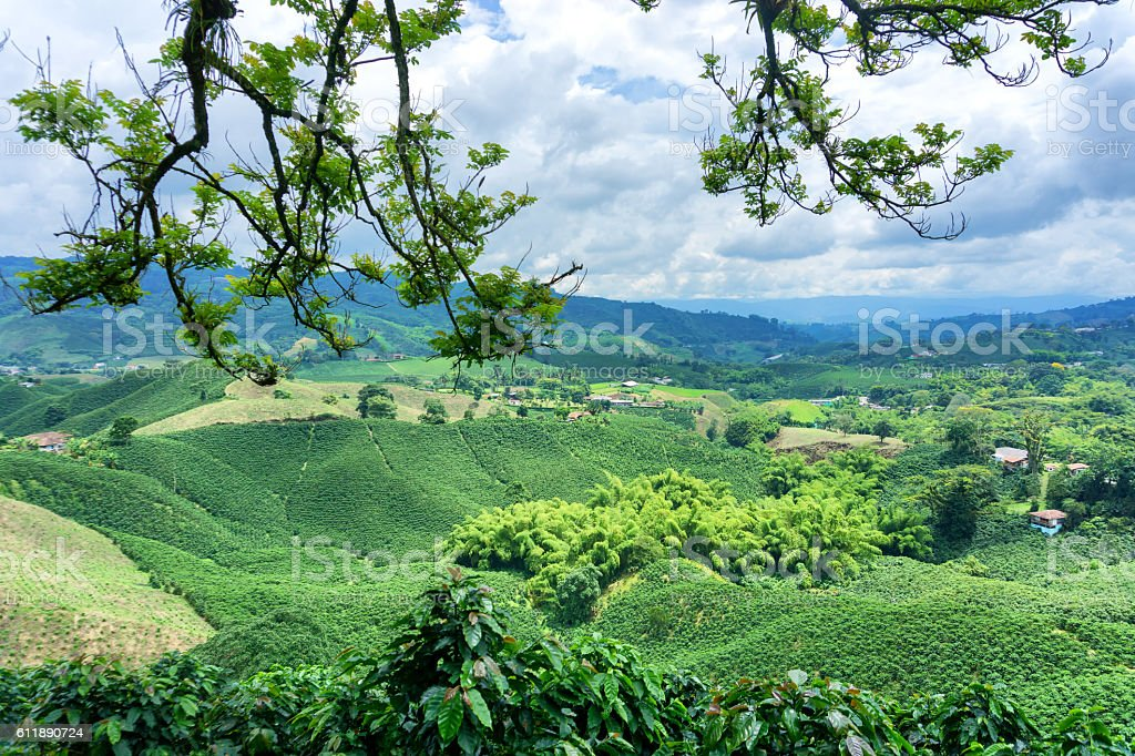 Coffee Landscape in Colombia stock photo