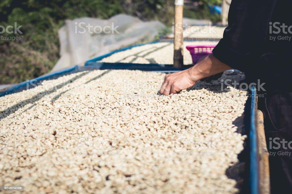 Kaffee macht Saatgut Verarbeitung zu verarbeiten und trocknen – Foto