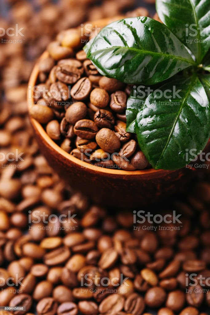 Coffee plant tree and roasted coffee beans. Top view stock photo
