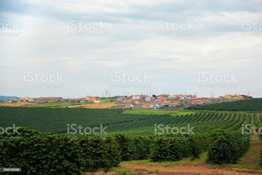 Coffee plantation close to city houses in Minas Gerais-Brazil – Foto