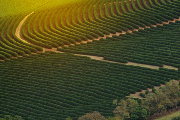 kaffeeplantage bauernhof inmitten der berge - plantage stock-fotos und bilder