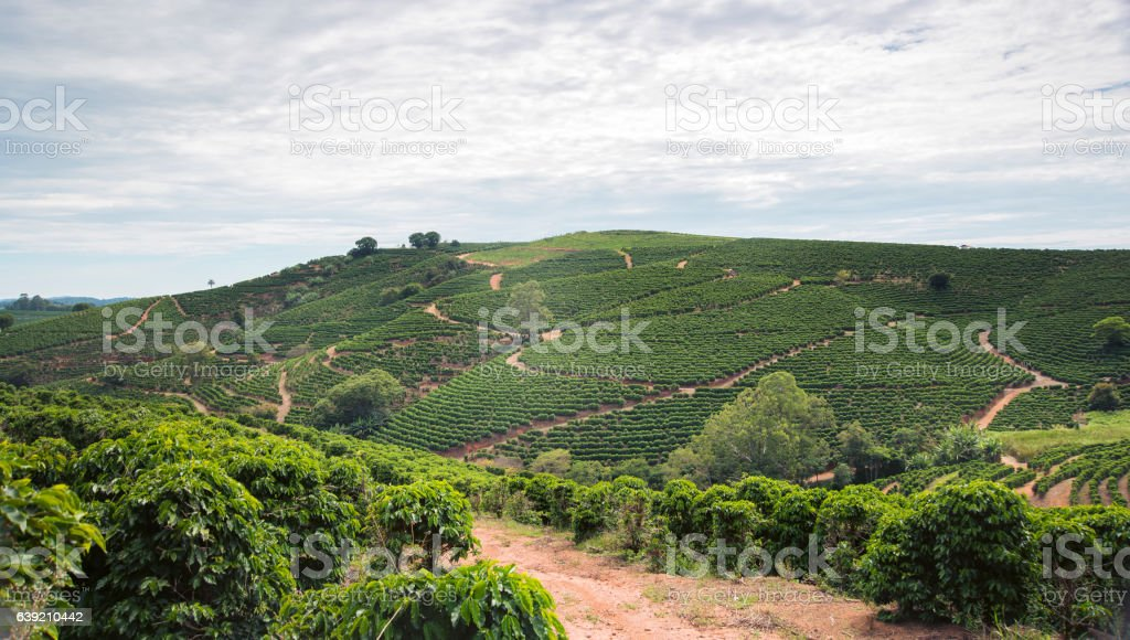 Coffee plantation over 1100m in Brazil – Foto