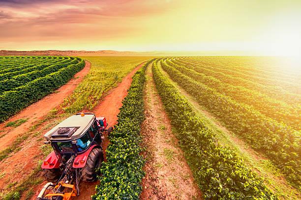 kaffeeplantage - plantage stock-fotos und bilder