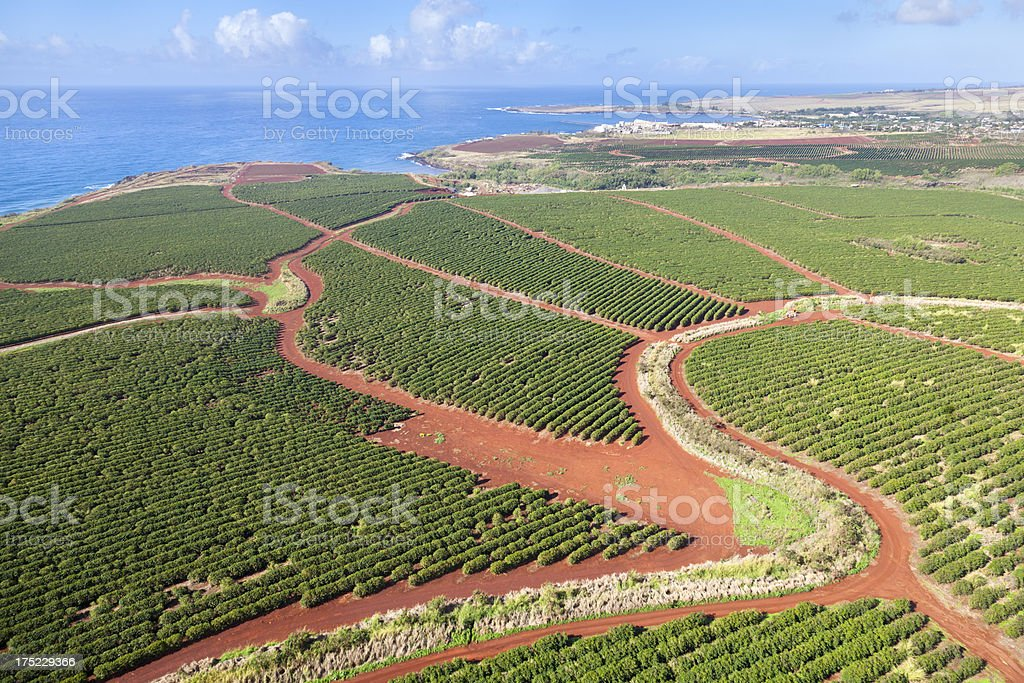 Coffee Plantations By The Coast, Kauai stock photo