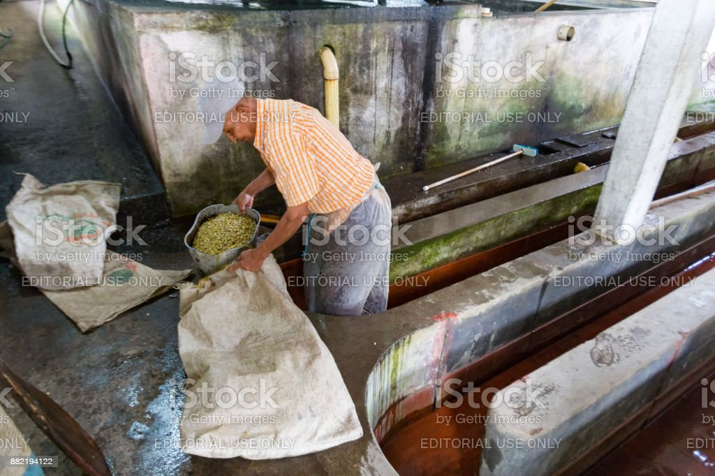 Coffee Process in Colombia stock photo