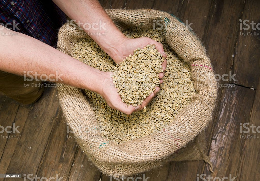 Coffee Seeds Held in Hands above the Burlap Bag royalty-free stock photo
