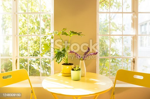 Shot of small coffee table with potted plants and chairs by window in an apartment