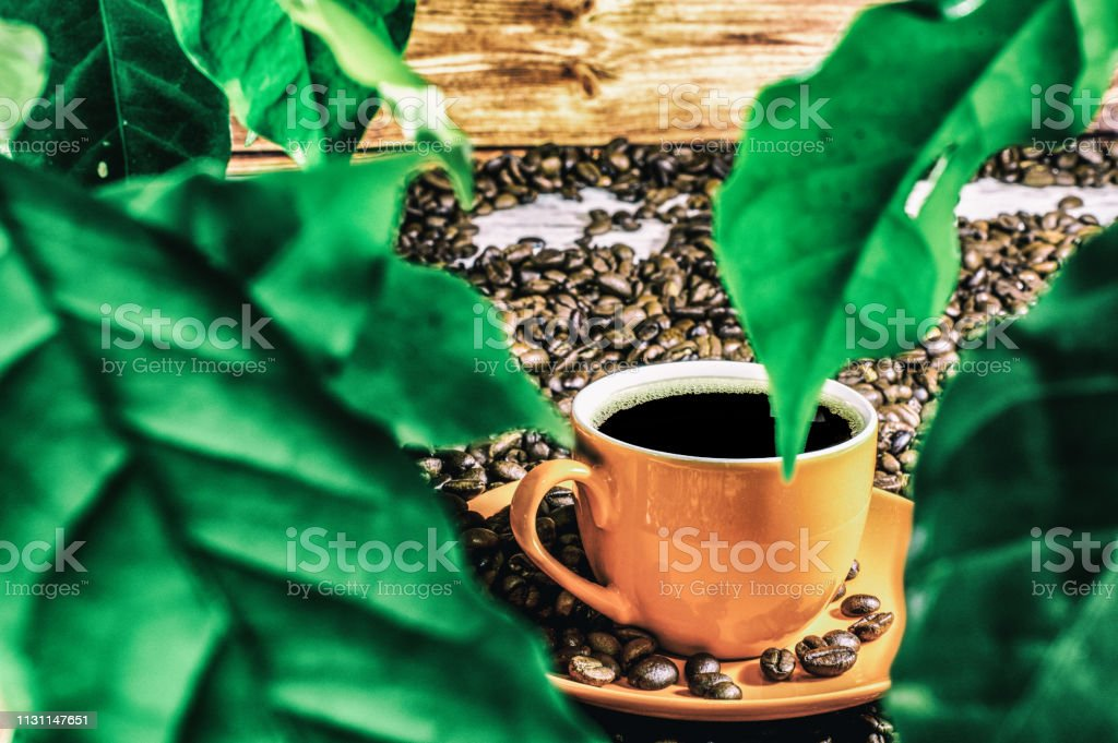 coffee with coffee leaves